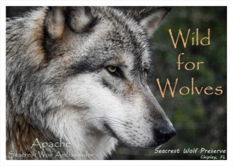 """Wild for Wolves"" Sticker"