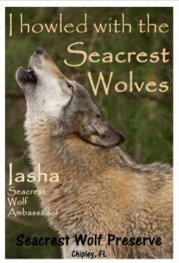"""""""I Howled with the Seacrest Wolves"""" Sticker"""