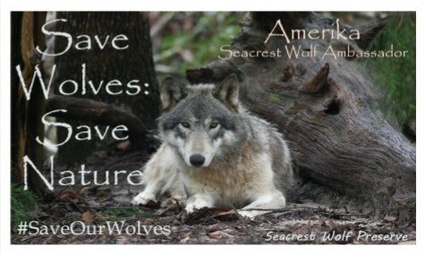"""Save Wolves: Save Nature"" Sticker"