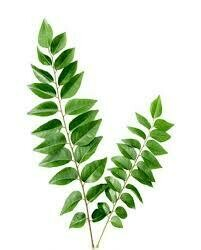 Curry Leaf / Kari Pata - Bundle