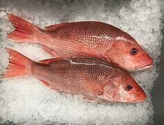 Red Snapper / Heera - 1000g ( 1 pc/Kg), Subject to availability, Please check before ordering.