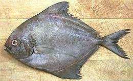 Black Pomfret / Kala Paplet - 1000g (2 pcs /kg)