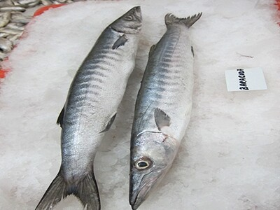 Black Barracuda / Kala Kund - 1000g ( Approx 1-2 Pcs/Kg)
