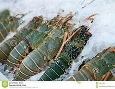 Lobster - 1000g (Approx 3 - 4 Pcs/Kg)