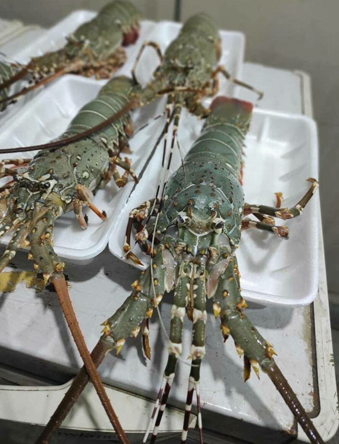 Large Lobster - 1000g (Approx 1 - 2 Pcs/Kg)