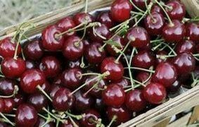 Cherries - 250g