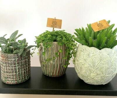 Pakket plantjes