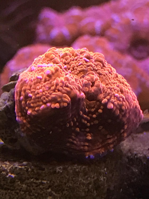 Bright Mushroom (21)