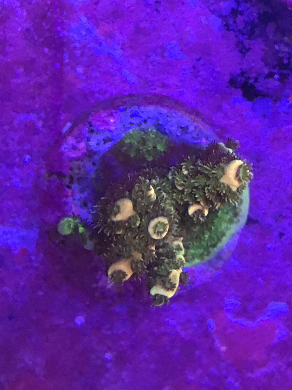 Reef Raft Pot Of Gold (6)