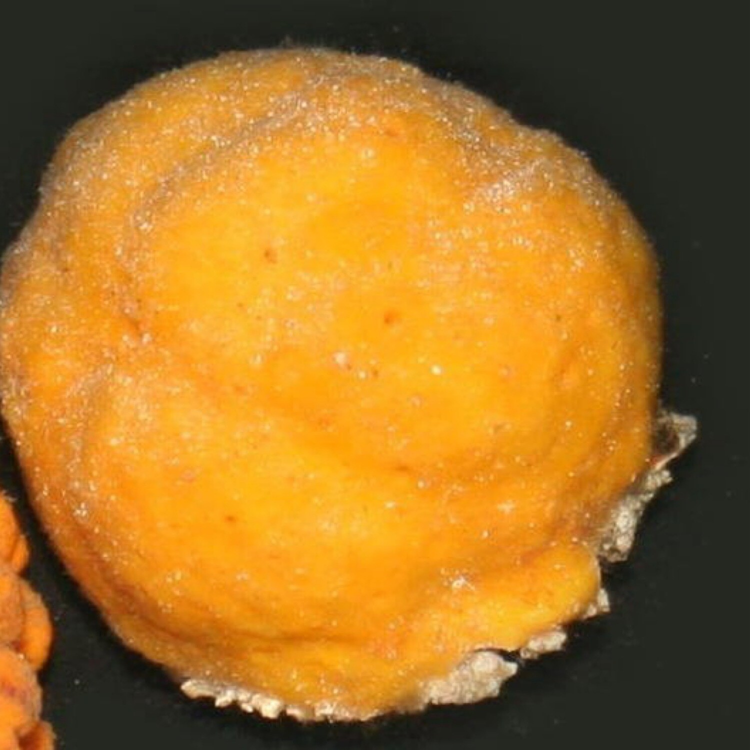 Orange/Yellow Ball Sponge