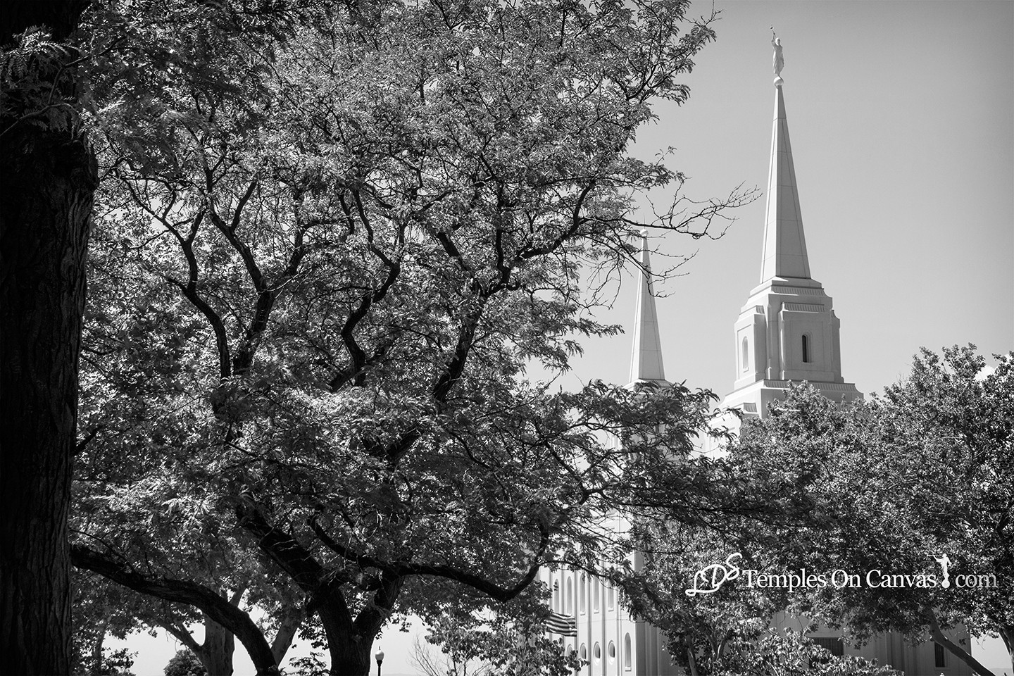Brigham City Utah Temple - Rise Above - Black & White