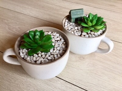 Set of Succulents in a cup