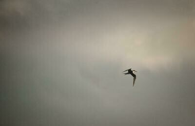 Storm Tern 8