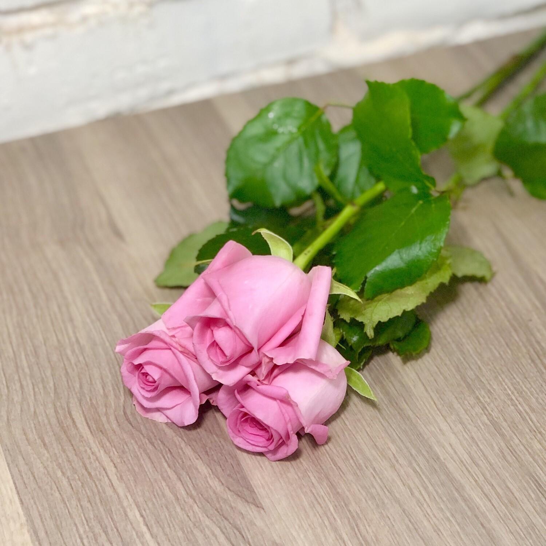 Роза розовая, по-штучно