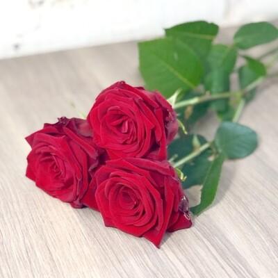 Роза красная по-штучно