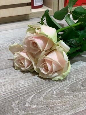 Роза Свит Аваланж по-штучно