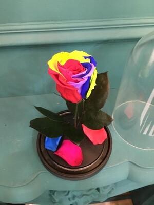 Роза в колбе Мини разноцветная