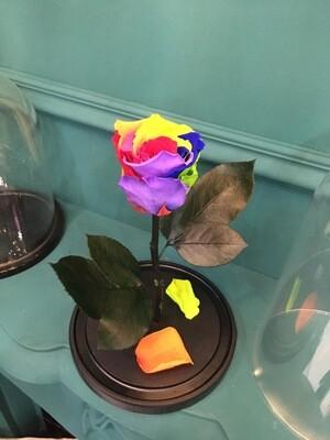 Роза в колбе Премиум разноцветная