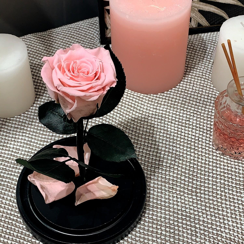 Роза в колбе Мини розовая