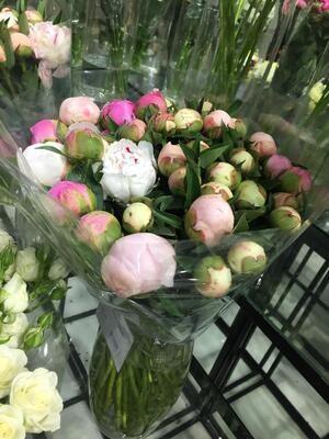 Пион нежно-розовый по-штучно