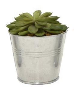 Succulent in Iron Pot #19737