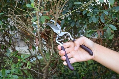 Everyday Forged Steel Bypass Pruner