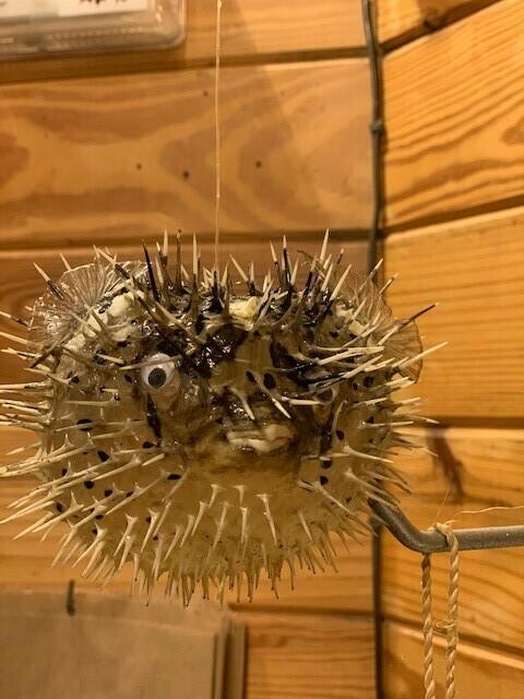 Blowfish Ornament