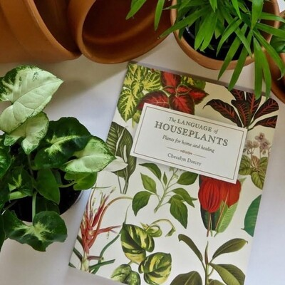 NEW RELEASE: The Language of Houseplants Book by Cheralyn Darcey