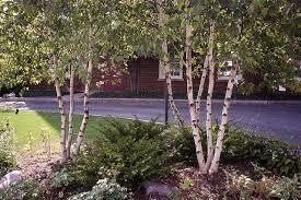 Birch Whitespire $259.99