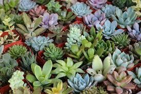 Grower Choice 4-Pack Succulent Assortment (Save $6.96)
