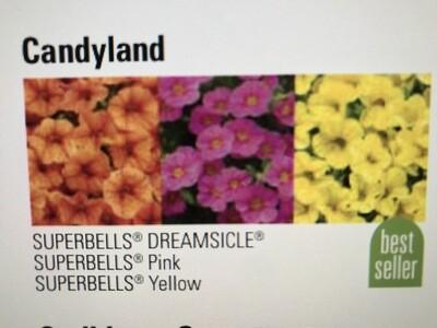 Candyland (12