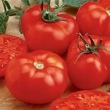 Tomato Beefmaster (gallon vegetable pot)