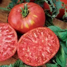 Tomato Brandywine Red (gallon vegetable pot)