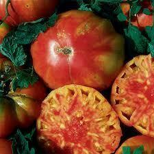 Tomato Hillbilly (gallon vegetable pot)