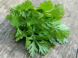 "Cilantro Santo (3"" herb pot) $6.99"