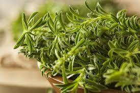 """Savory Summer (3"""" herb pot) $6.99"""