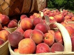 Peach 1/2 Bushel Basket $48 (produce)