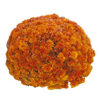 Mum Vitamum Kick Orange (9