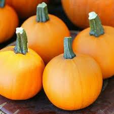 7004 Apprentice (pumpkin) $1.50