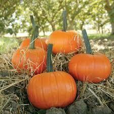 7006 Field Trip (pumpkin) $3.50