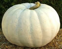 7008 New Moon (pumpkin) $25.00