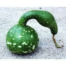7011 Speckled Swan (gourd) $7.99