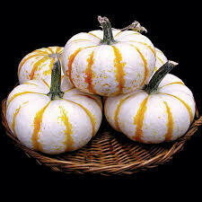 7020 Lil' Pump-Ke-Mon (pumpkin) $2.99