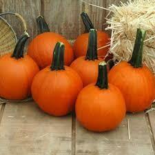 7023 Little Giant (pumpkin) $2.50