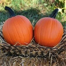 7003 Mischief (pumpkin) $2.50