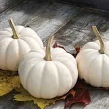 7034 Casperita (pumpkin) $2.99