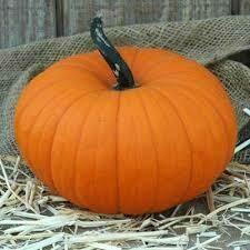 7041 Flatso (pumpkin) $3.50