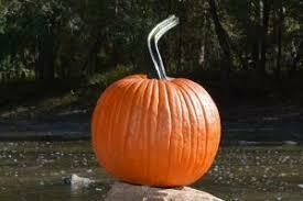 7108 Progress (pumpkin) $5.00