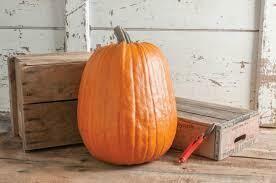 7127 Early Giant (pumpkin) $12.00