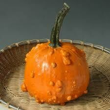 7159 Toad (gourd) $1.49